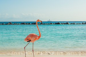Discover Anegada Island