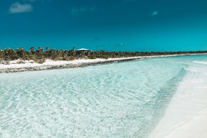 Discover Compass Cay