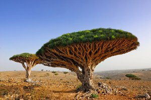 Discover Socotra