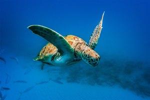 Discover Barbados