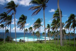 Discover St Kitts and Nevis