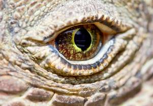The Ultimate Guide to Visiting Komodo Dragons on a Luxury Yacht Charter