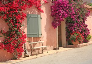 Porquerolles: The most enchanting island in the South of France