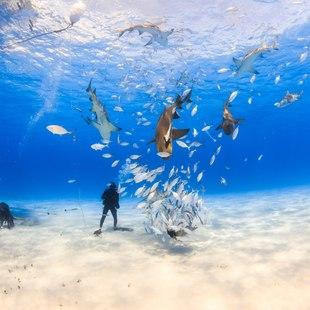 Grand Bahama Island photo 11
