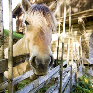 Looking sad horse behind the fence