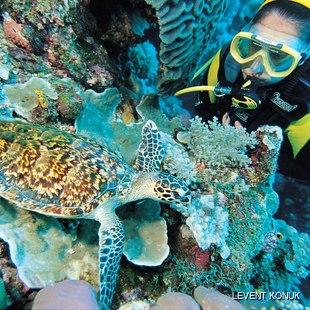 Diver observing marine life