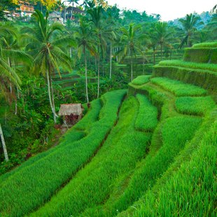Beautiful natural grassy stairs in India