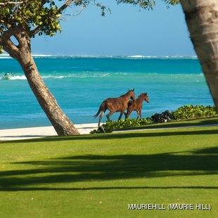 2 horses running on the beach