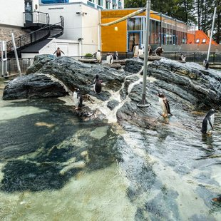 Bergen photo 9