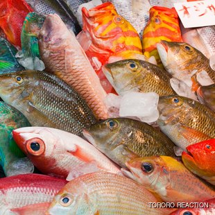Freshly caught tropical fish at the fish market