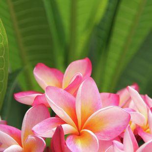 Tahiti photo 26