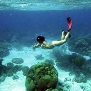 Spectacular underwater world