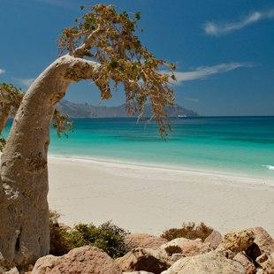 Socotra photo 3