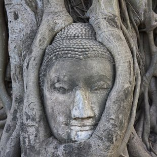 Find the Buddha's Head in Ayatthaya