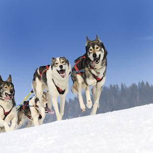 Alaska photo 17