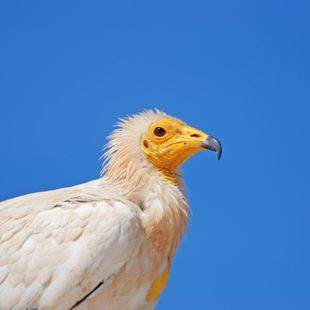 Socotra photo 30