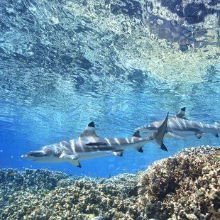 Solomon Islands photo 21