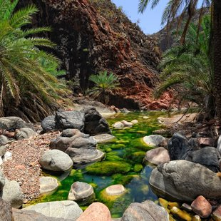 Socotra photo 26