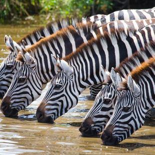 Tanzania photo 13