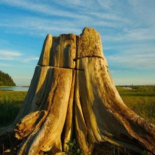 British Columbia photo 29