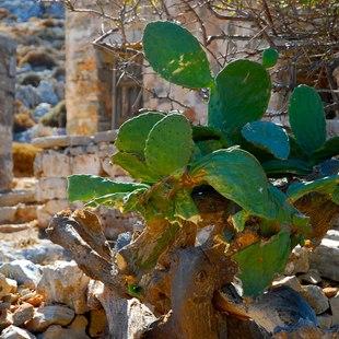 Folegandros photo 11