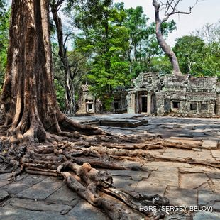 Giant, old trees with protruding roots next to the temple