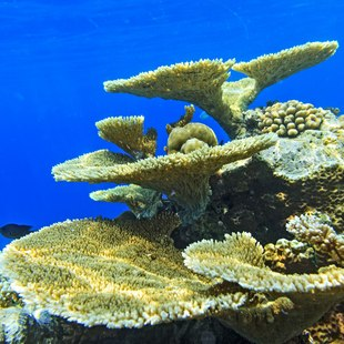 Explore the Coral Reefs of the Maldives