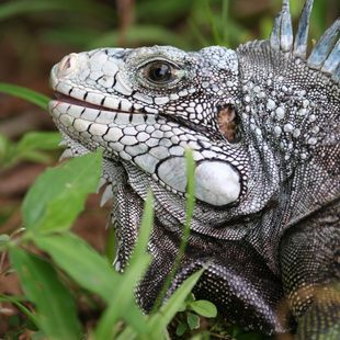 Meet the Incredible Wildlife of Grenada