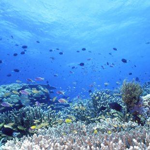 Solomon Islands photo 13
