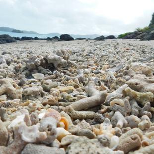 Whitsundays photo 20