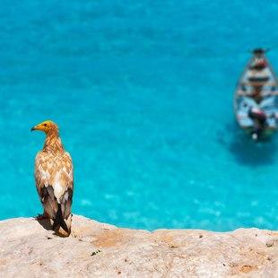 Socotra photo 20