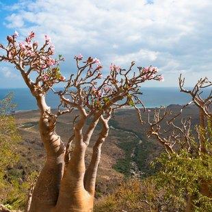 Socotra photo 31
