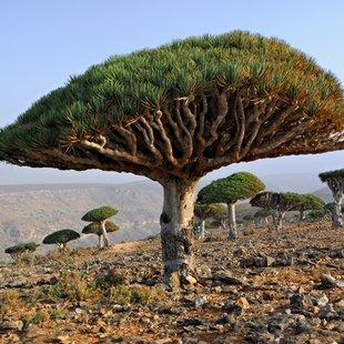 Socotra photo 32