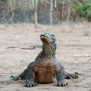 Komodo photo 20