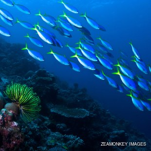Horizontal photo group of fish swimming over a coral reef