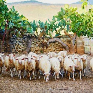 Sardinia photo 34