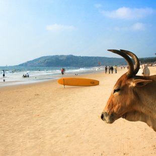 Indian Ocean photo 18