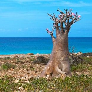 Socotra photo 2