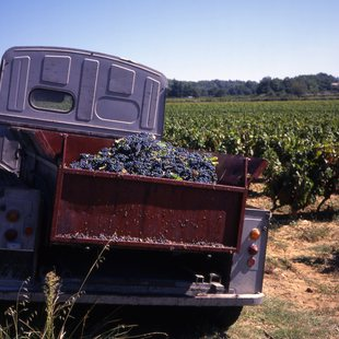 Tour the Vineyards of Provence