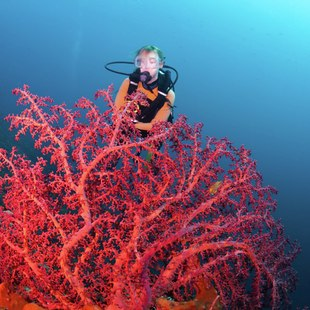 Diver on the bottom of the sea