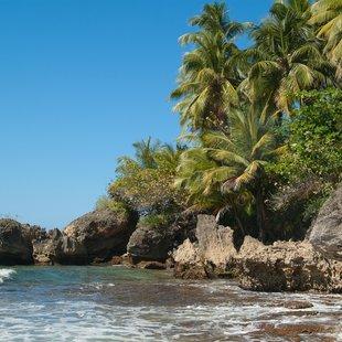 Rocky coast with palm trees