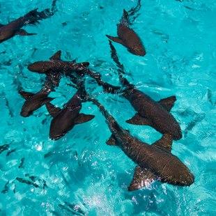 Compass Cay photo 3