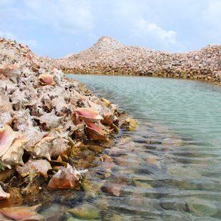 Anegada Island photo 3