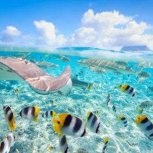 Tahiti photo 12