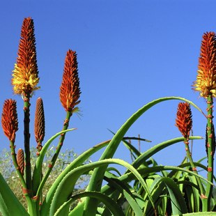 Southern Africa photo 7