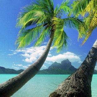 Tahiti photo 15
