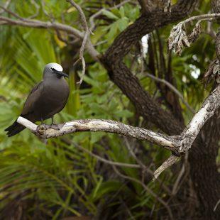 Mayaguana photo 16