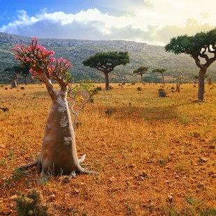 Socotra photo 18