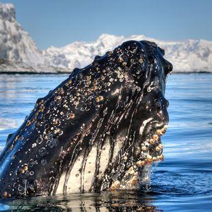 Antarctica photo 4