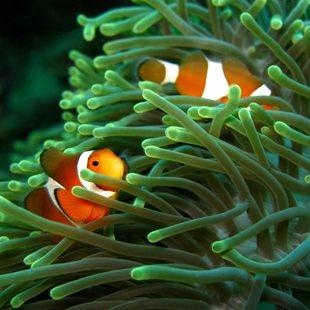 Palau Islands photo 20